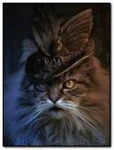 Sweet Lady Cat