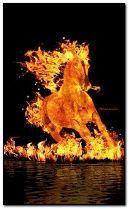 फुर्तीला घोड़ा