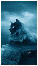 Kucing fantasi