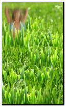 grass girl