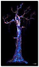 Live tree