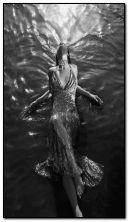 леді в воді.