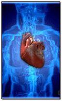 battito cardiaco 240x400