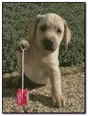 dog playing yoyo