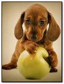 Dog and Ball:::