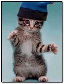 duvar kağıdı bergerak-kucing-joged
