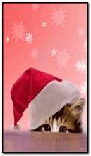 Santa-cat-By-steffi1968 (360x640)