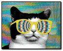 Gato hipnotista XD