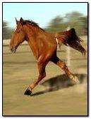 आधा घोड़ा