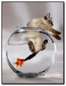 Fish vs Cat