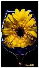 kwiat w szklance
