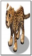 cheetah 360x640