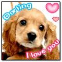 Doggy darling i lov u