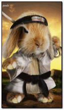 忍者ウサギ