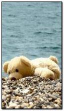 Teddy sur la plage