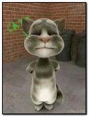 Cat Tom