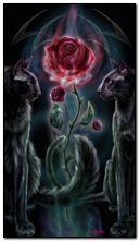 गॉथिक गुलाब