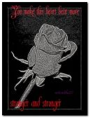 belle rose.