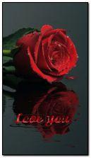 Rose im Herzton