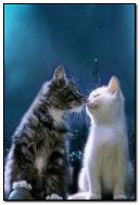 El amor de los gatos