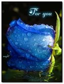 Blue rose with rain drops