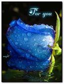 Rose bleue avec des gouttes de pluie
