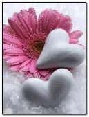 Flower and hearts