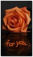 Rose in orange tone