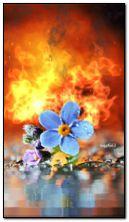 Burning passion