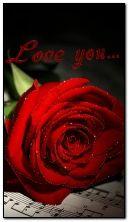 seni seviyorum.