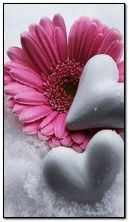 flower-and-hearts