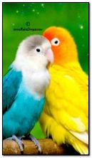प्रेम पक्षी