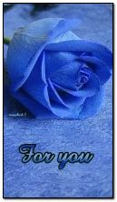 Blaue Rose für dich