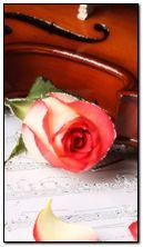 rose n notes