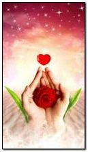 Tình yêu Rose