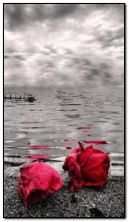 sea and red rose HDO302