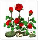 roses swaying