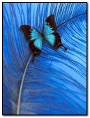 Butterfly in feather