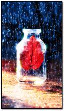 botol dalam hujan