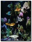 aquarium sea