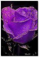 uma rosa para você