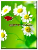 Red butterfly and chamomile