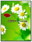 Rama-rama merah dan chamomile