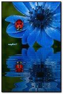 নীল ফুল