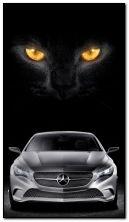 araba kedisi