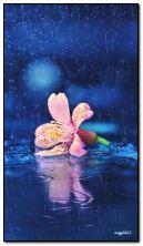 fiore sotto la pioggia