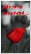 A vida é tão bela