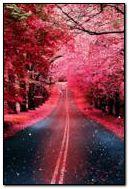 Różowa droga