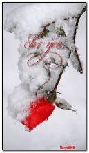 روز في الثلج