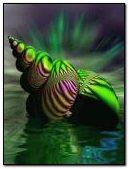 neon deniz kabuğu